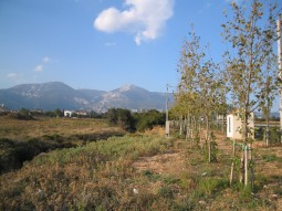 Restructuring of the Surroundings and Accesses of the Olympic Village of Athens